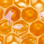 Honey Extract